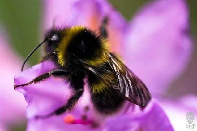 A Bee Blur