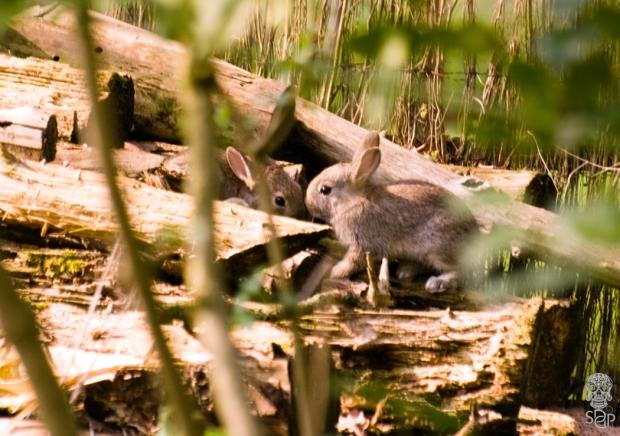 A Bunny Blur