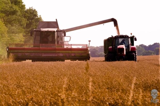 Grain Sharing Beasts