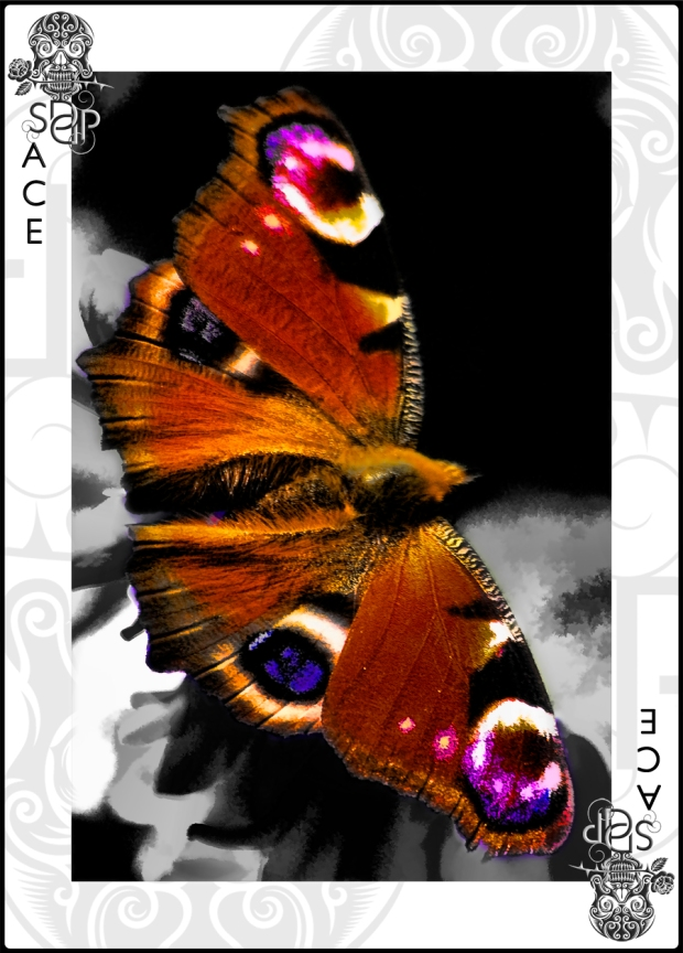 Butterfly Ace card