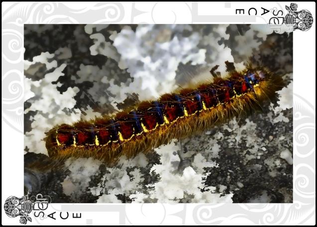 Caterpillar Ace card