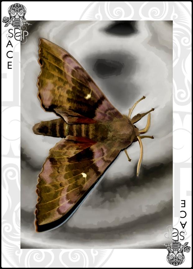 Moth Ace card