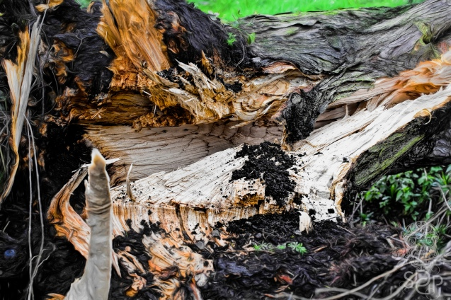 Fallen Tree - detail 2