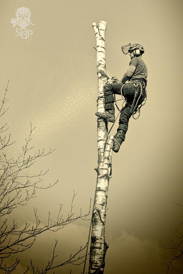 TreeFeller