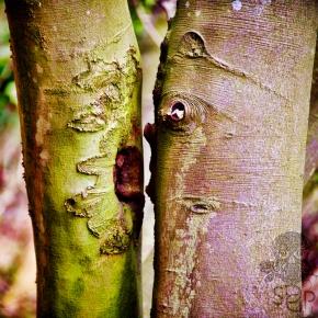 Tree Truncated