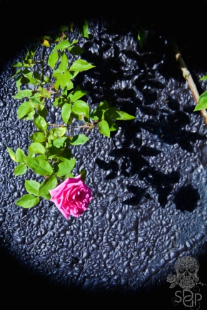 Inherit the Rose